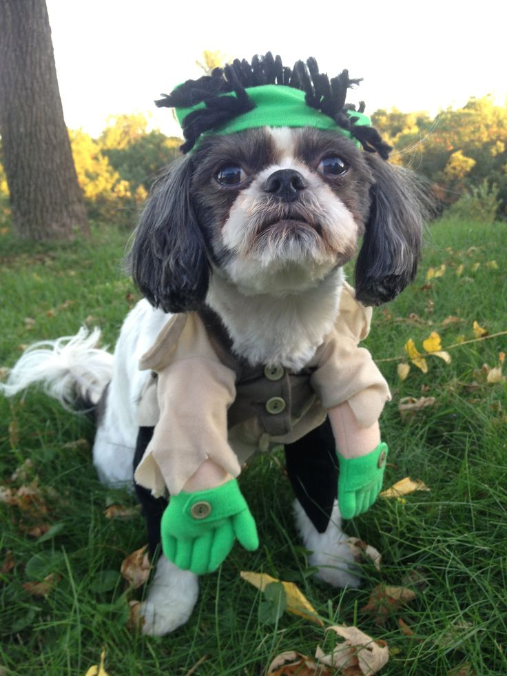 1000+ Images About Dogs Dressed Up On Pinterest