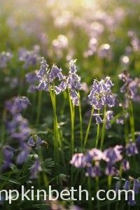 Wonderful Places To See Bluebells in Surrey, Hampshire and Sussex | Pumpkin Beth