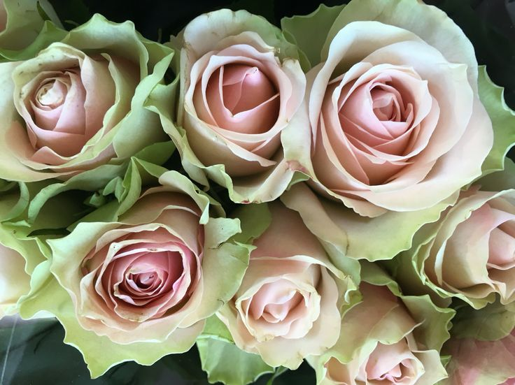 roses by the memo group