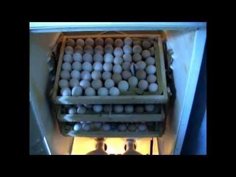 сельская жизнь: Инкубатор из холодильника