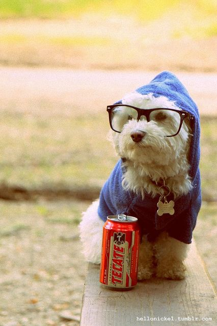 Hipster dog. @Camille Blais Dejoras