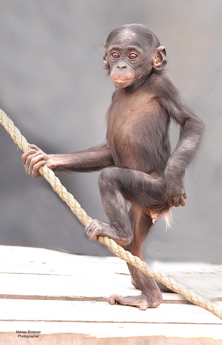 Lucy Jacksonville Zoo and Gardens | Mammals | Pinterest ...
