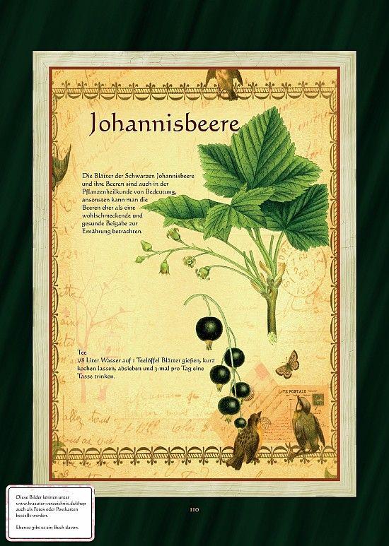 Johannisbeere - Johannisbeerblättertee
