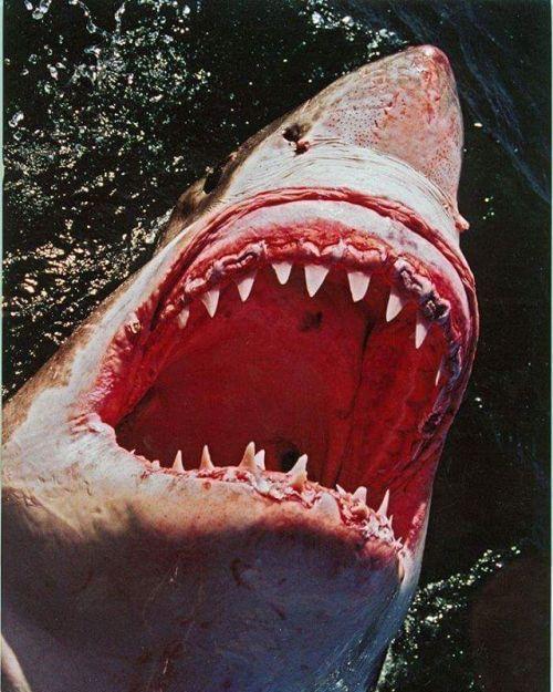 2000-ben a Carcharias  A nagy fehér cápa című dokumentumfilm forgatása közben Steve Lichtag kinn volt a nyílt tengeren a főszereplő felbukkanására várva. Steve visszaemlékezése szerint: Miközben várakoztam az egyik operatőr bemászott a hajónkon lévő biztonsági ketrecbe és készenlétben állt hogy készítsen pár felvételt én pedig puszta kíváncsiságból elkezdtem próbálgatni az új Nikon F70 fényképezőgépét. Amikor valaki hirtelen elkiáltotta magát: Nagy fehér jobbról! Erre odafordultam gyorsan 40…