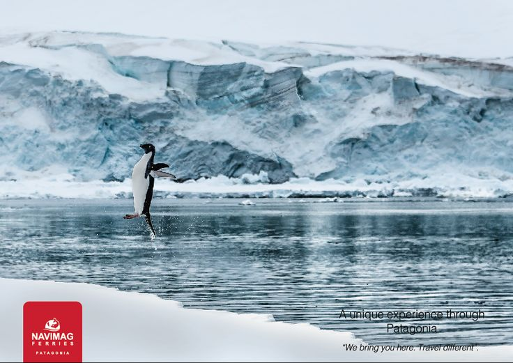 A jumping penguin in the end of the world!