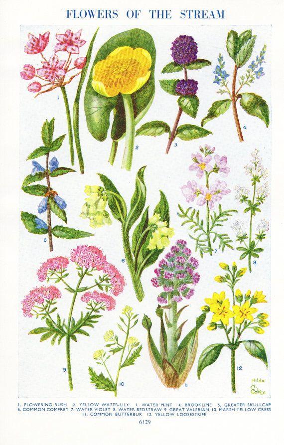 vintage botanical flower