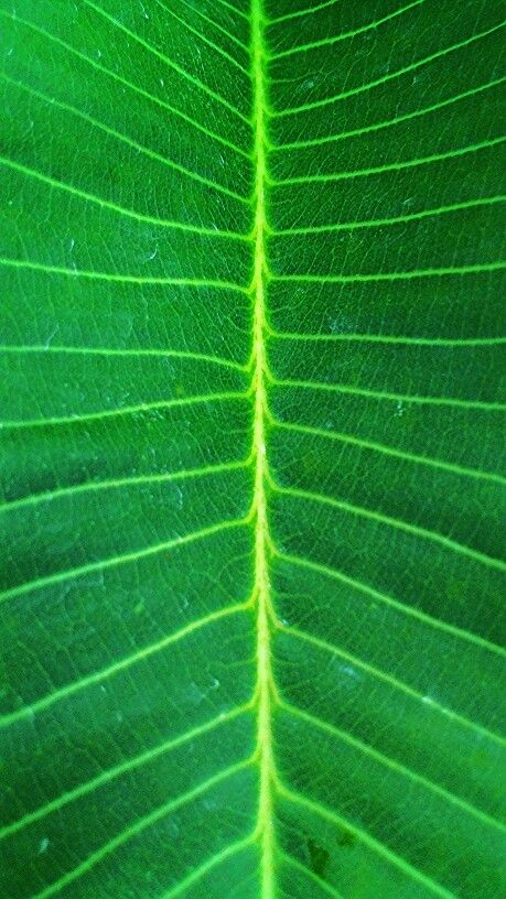 Photosynthesis !  Gaurav Kay