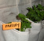 Indoor hanging herb garden using a shoe organizer.