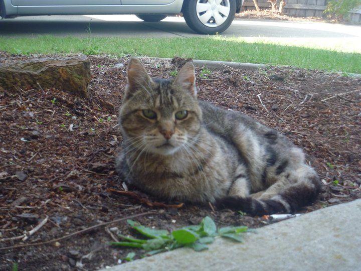 My kitty :( RIP Harry xx