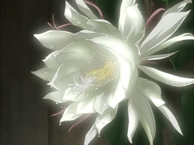 Lunarflower from Wolf's Rain <3