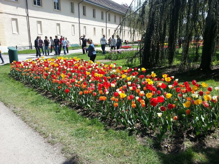 Morges,  Фестиваль тюльпанов