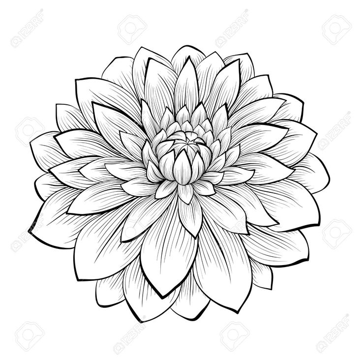 dahlia flower tattoo black and white - Google Search