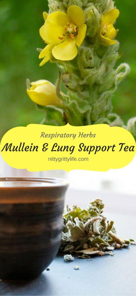 Respiratory Herbs: Mullein Benefits & Lung Support Tea