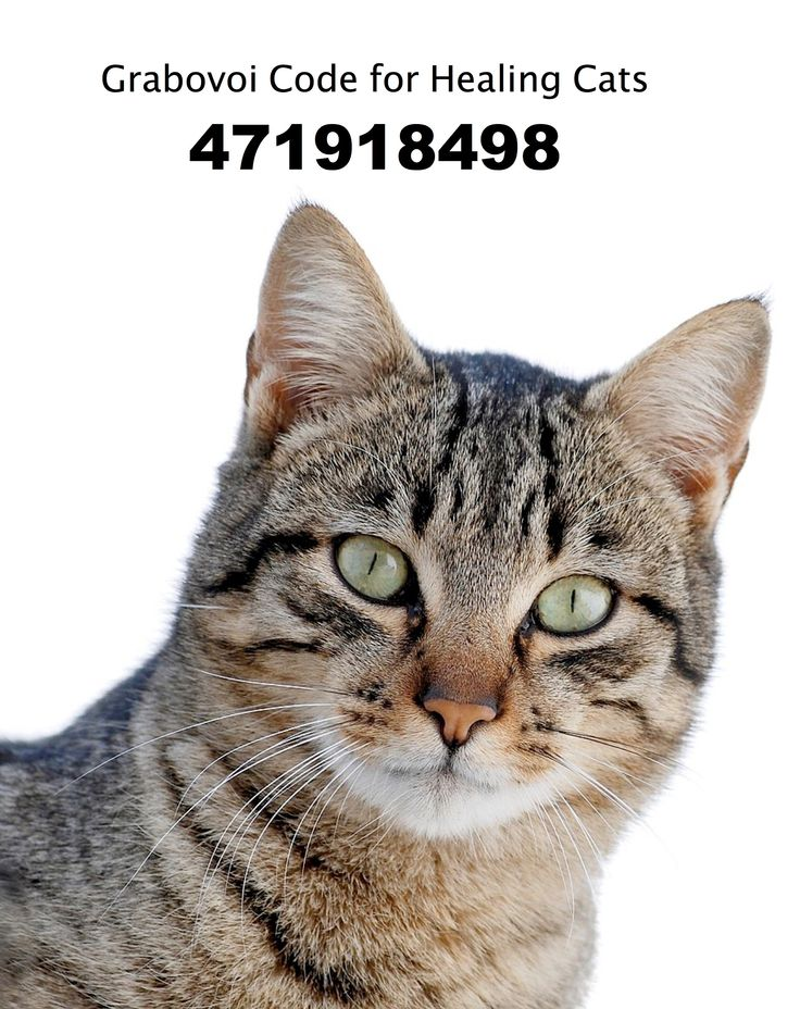 Grabovoi Code for Healing Cats. 471918498