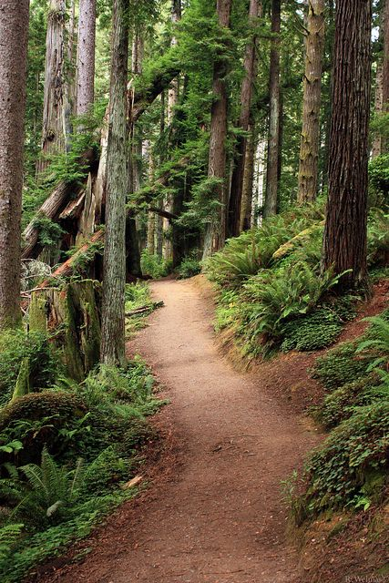 Arcata Redwood Park, the path I used to walk to my classes at Humboldt State.