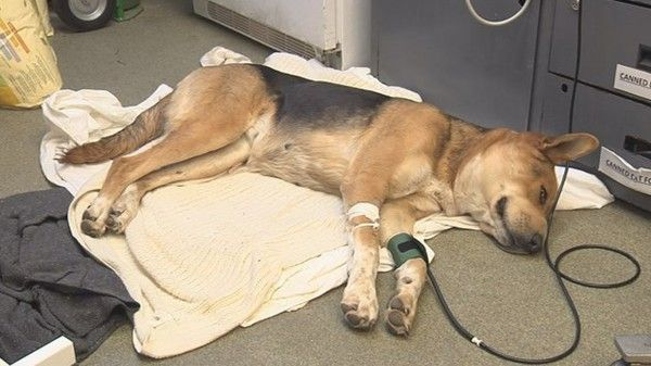 Justice for Arizona dog hit repeatedly, hung from a tree by her snout! | YouSignAnimals.org