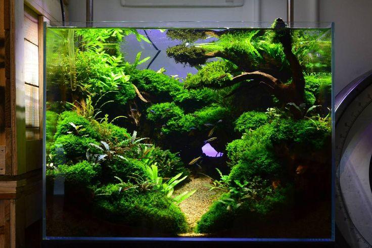 favourites display tank at exotic aquatic amazing scenery. Black Bedroom Furniture Sets. Home Design Ideas