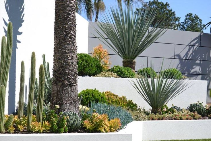 A garden that has colour, texture and drought tolerance, can be achieved using plants from Dragon Trees Australia. Let us be a part of your next project.