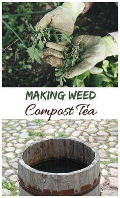 Making compost tea with weeds and rain water. #weedcomposttea #gardenfertilizer