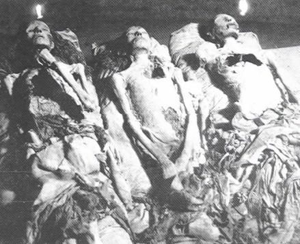 Nefetiti origin - nefertitibyfay.com nefertitibyfayroza.com439 × 356Search by image Taken by candlelight, this is a photo of three mummies. The mummy of the young boy is in the middle, flanked by the Elder Woman (on the left) and the Younger Lady