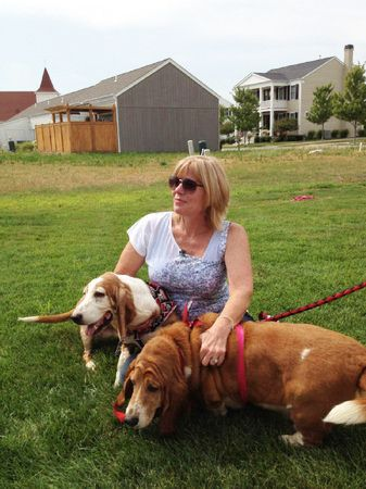 Stolen Basset Hounds Recovered After Five Years: Basset Hounds Dogs, Tenness Couple, Couple Reunited, Basset Galas, Stolen Basset, Basset Boards, Bassett Hound, Basset Addiction, Basset Life