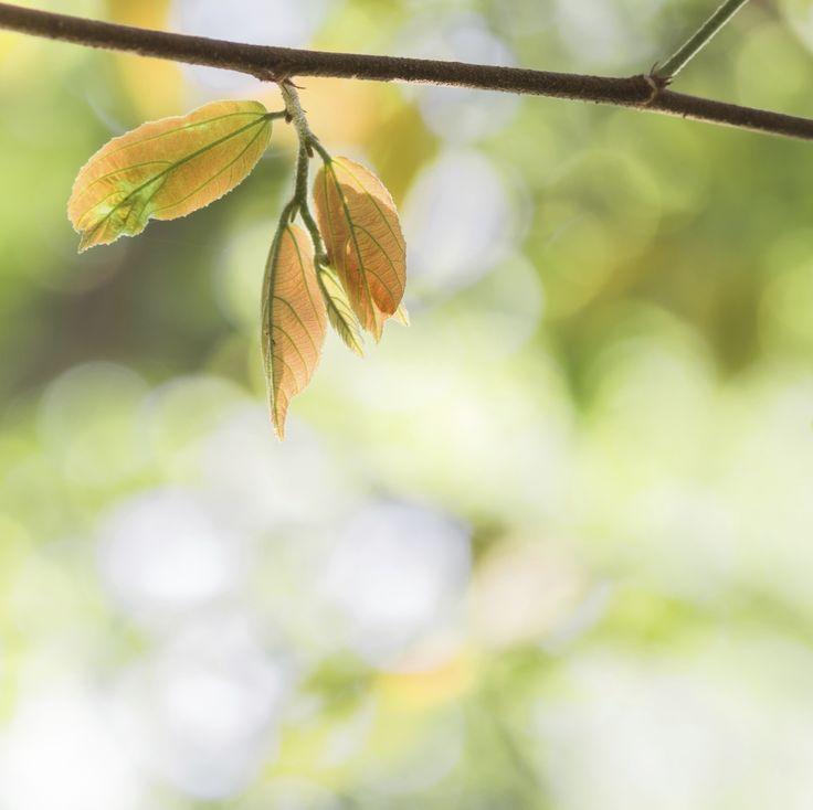 Entenda a linguagem das plantas e saiba como agir quando elas pedem socorro