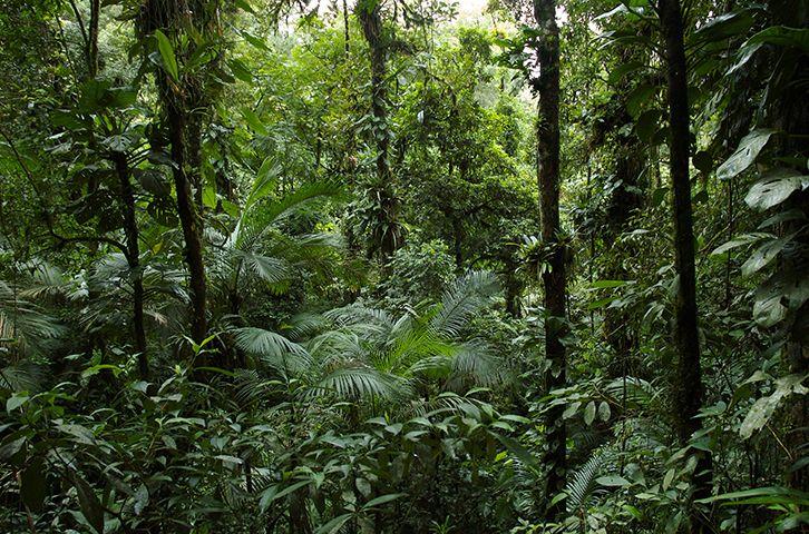 Floresta Tropical- Localização, preservação e situação atual.