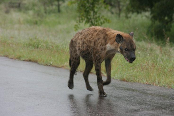 #african wild life
