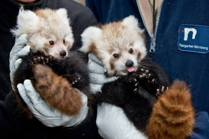 Our favourite cute animal photos