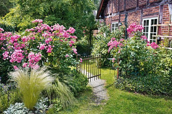 Buschige Rosen im Bauerngarten - Tipps für Pflanzen