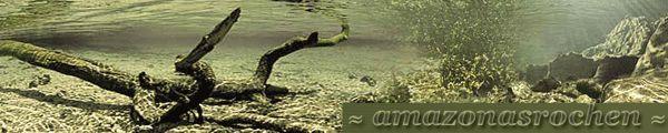 discus in amazon | Fabuleux site allemand dédiés aux raies et l'Amazonie. Vous ...