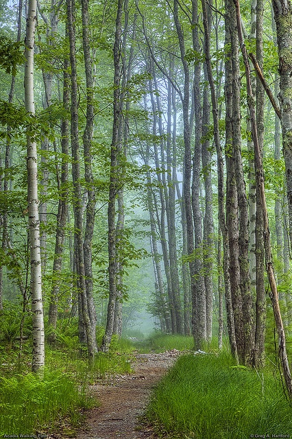 Walking Path, Acadia National Park by Greg from Maine, via Flickr