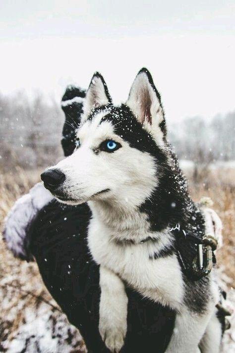 Amor Perruno, Perros Bonitos, Perros Lindos, Razas De Perros, Perros Cachorros, …