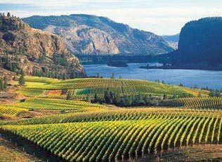 Vineyard on Okanagan Lake