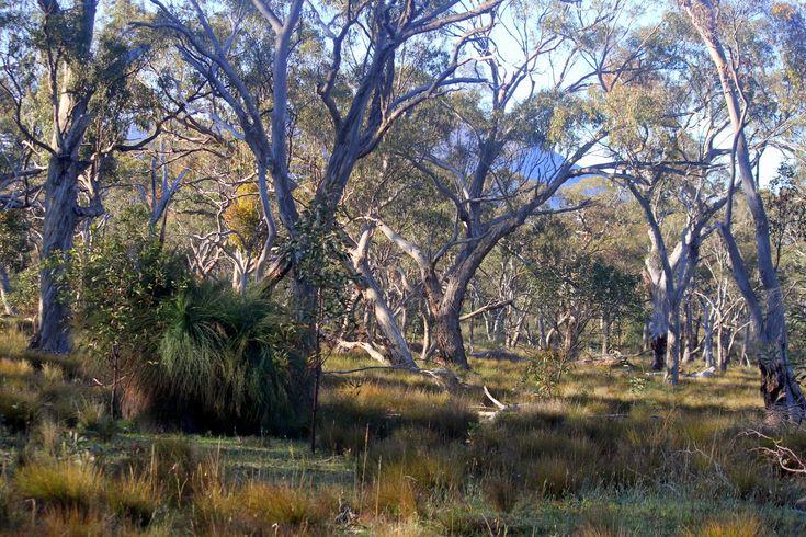 Woodlands.jpg (1600×1067)
