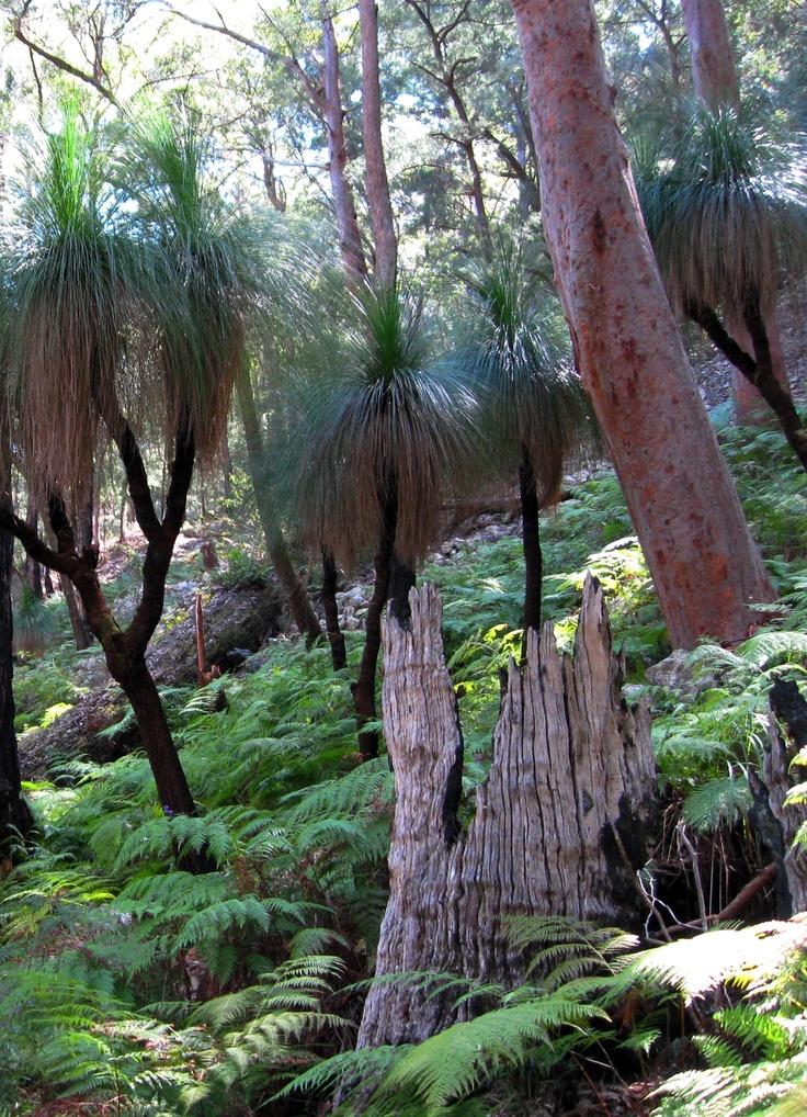 Unique flora, at Bulahdelah State Forest, NSW, Australia.