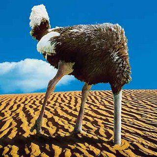 Blog: Myranda Smeelen. Ben jij een kameleon of liever een struisvogel?