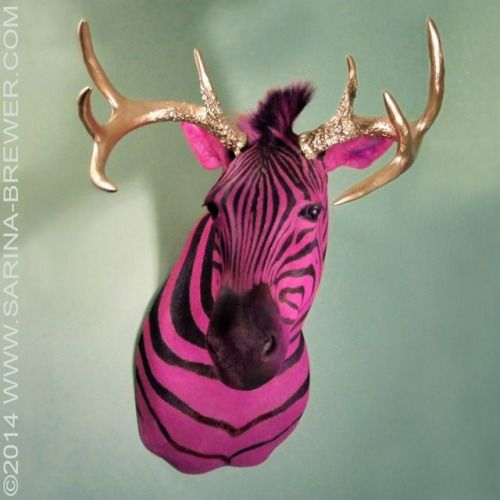 """""""HIGH HORSE"""" ©2014 WWW.SARINA-BREWER.COM Sculpture by artist Sarina Brewer, co-founder of the taxidermy art movement. Dyed animals are one of the contributions she is noted for bringing to the genre. See the work that was the catalyst for the art movement at https://www.facebook.com/Rogue.Taxidermy.Art/  Sculptural concept copyrighted. Protected under registration number VAu 1-250-503. Derivative works prohibited by law #Pink #Zebra #Taxidermy #Art #Gold #Antlers"""