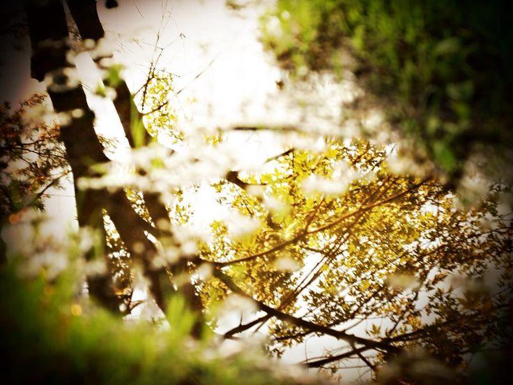 #jfdupuis #naturephotography