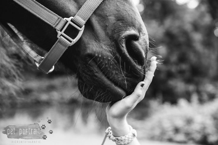 Paardenfotograaf - Fotoshoot voor een Fries paard en een Shetlandpony-12