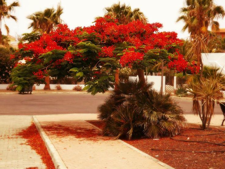#Photography #Tree #Spanish #Spain #Red #Flowery