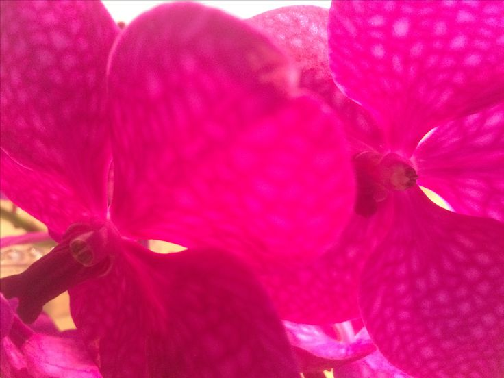 Orchid, picture by my