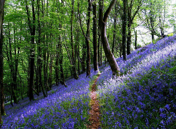 Duloe Wood near Looe