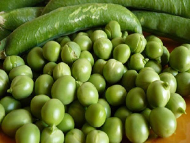 Cultivo del guisante | Planeta Huerto
