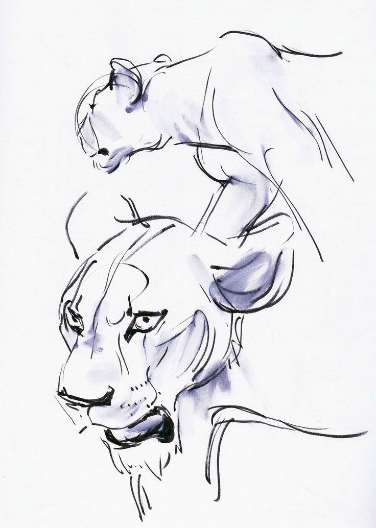 Lion King - Animation reference - Andreas Deja