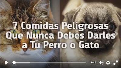Animal Friend: QUE ALIMENTOS NO DEBES DARLE A TU PERRO O GATO
