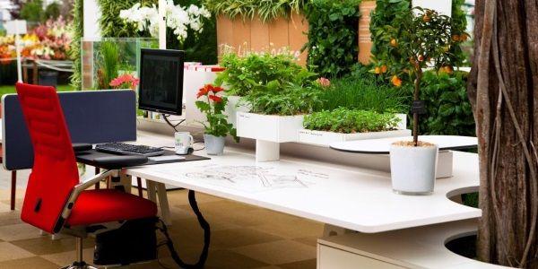 piante ufficio