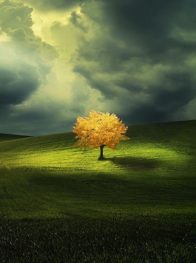 #tree #beautifull