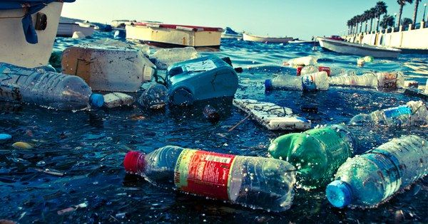 Plastic Trash Found in Ocean Animals Living 7 Miles Deep