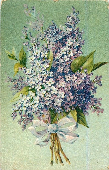 Bouquet of purple lilac tied with light purple/blue ribbon ~ 1908